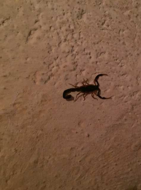 the house of the scorpion theme In the novel, the house of the scorpion there is a variety of themes however the main theme is equality the protagonist matt is not treated the same as anyone else in the country of opium because he is a clone.